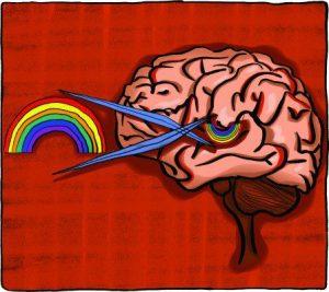 brain1-e1437433699285